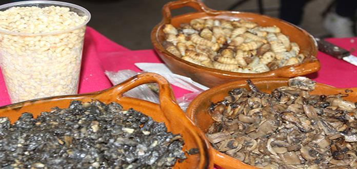Bichos, un tesoro de la gastronomía mexicana