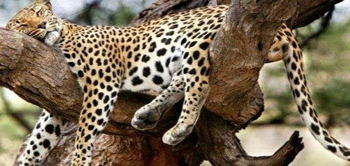 Jaguares se pasean por Axtla
