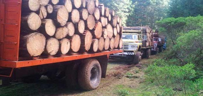 Al menos 70% de la madera que se consume en México es ilegal