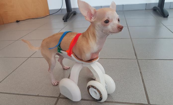 Diseñan en la UVM carrito impreso en 3D para mejorar movilidad de un Chihuahua