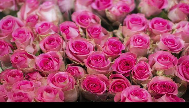 Flores Para Mamá Un Regalo Caro Para Este 10 De Mayo
