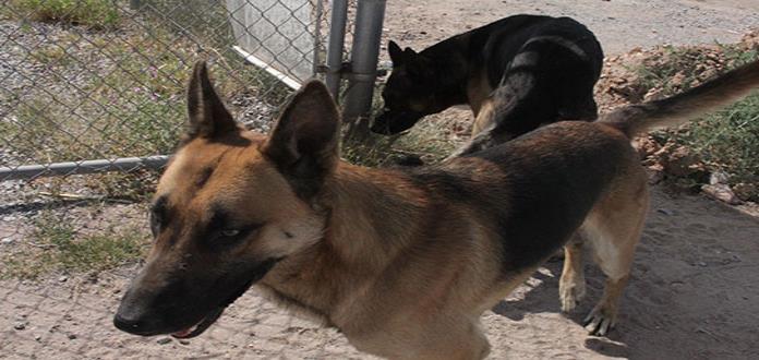 Aumentan las mordeduras de perros: Salud