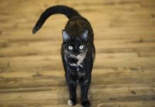Pide joven en Facebook un millón de comentarios para que la dejen adoptar gatitos