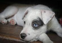 Prohibirían en SLP mutilación de animales por razones estéticas