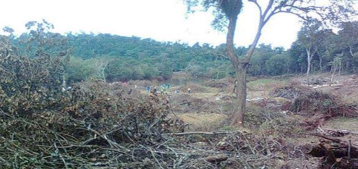 Ingenio devasta selva virgen en zonas de Tamuín
