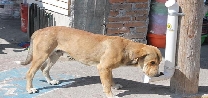 En Soledad instalan  comederos para perros