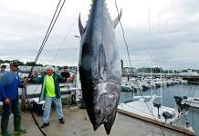 México anuncia el levantamiento de la veda de atún
