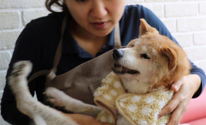 Vejez y enfermedad propician el auge de residencias para mascotas en Japón