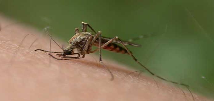 Casos de dengue en Bolivia se multiplican por diez respecto a 2017