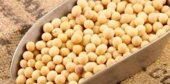 Soya: buena proteína, pero con moderación