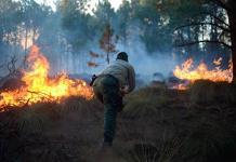 Controlan incendio forestal en Las Vigas