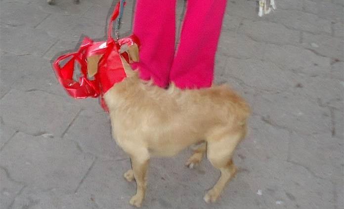 Invitan a dueños de perros a la 1er Running dog