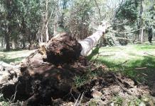 Fuertes vientos provocaron caída de árboles y lonas desprendidas en la capital de SLP