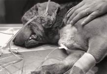 Muere Miky, el perro al que le sacaron los ojos