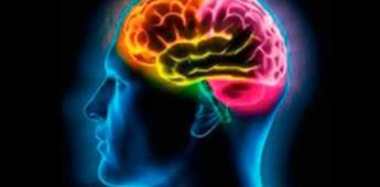 Conexión entre el cerebro y órganos, responsable de las emociones