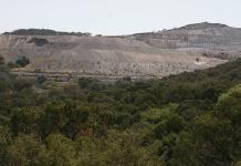 Cambio climático amenaza a encinos de Sierra de Álvarez