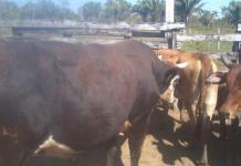 Crítica sequía, pronostican los ganaderos