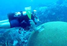 Un mal sin precedentes que mata a los corales de Florida acecha al Caribe