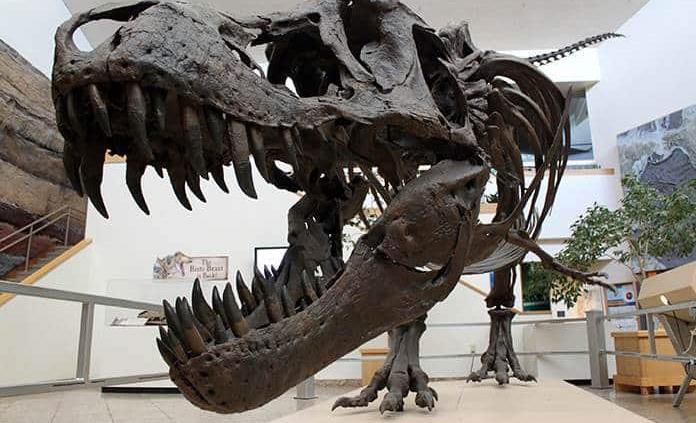 Los dinosaurios, favorecidos por volcanes que impulsaron el cambio climático