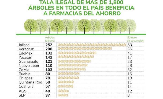 Denuncian tala ilegal de árboles en beneficio de cadena de farmacias en todo el país