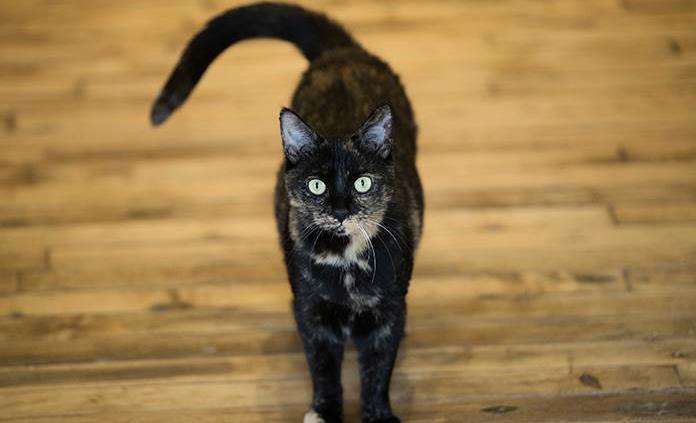 Gatos de casa saben reconocer sus nombres, dice estudio