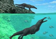 Hallan restos de una ballena con cuatro patas similar a una nutria en Perú