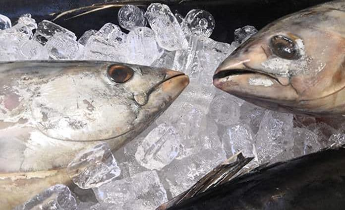 El atún rojo andaluz era un manjar en la Grecia clásica, según un estudio