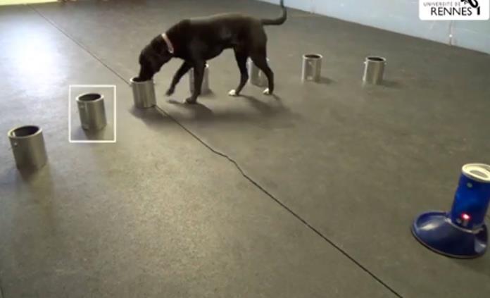 Perros entrenados identifican olor específico de ataques epilépticos