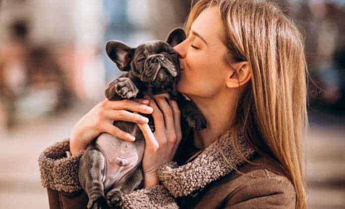 Perros y gatos, portadores de pulgas con altos niveles de bacterias patógenas: Universidad de Bristol
