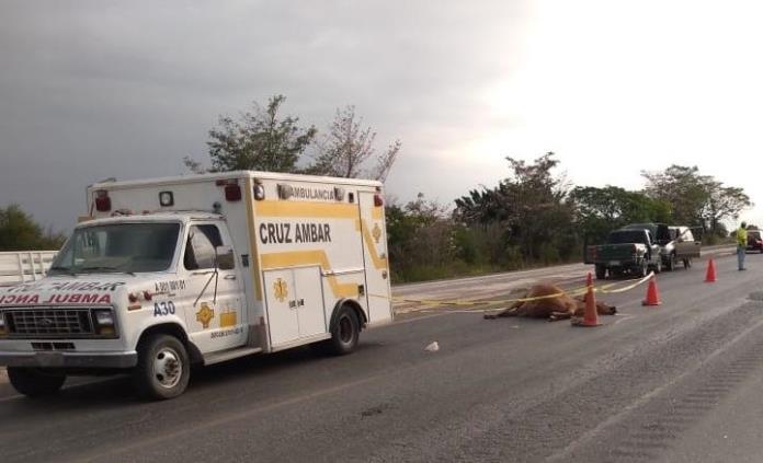 Motociclista muere tras chocar contra una vaca en Ébano