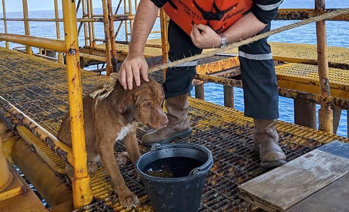 Rescatan a perro que nadaba a 220 km de la costa de Tailandia