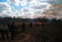 Incendios impactan unas tres mil hectáreas de zonas forestales en Yucatán