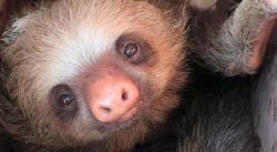 Federales rescatan a monos cara blanca y osos perezosos en Chiapas