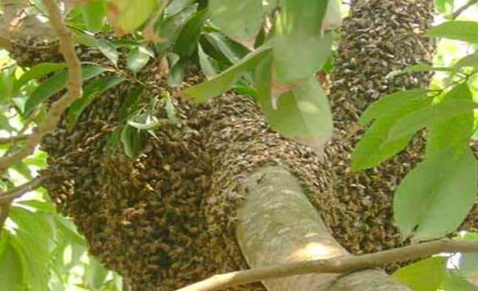 Se arroja al agua para escapar de abejas