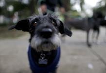 Atención y cariño, esenciales para mascotas en edad avanzada