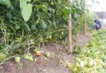 Granizada daña 30 hectáreas de jitomate y chile