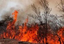 Brigadas combaten fuerte incendio en el estado de Guerrero