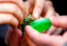 Anuncia Ssa que en julio habrá diagnóstico sobre consumo de drogas