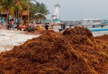 Marina encabezará estrategia para solucionar problema de sargazo en Quintana Roo