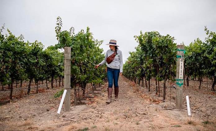 El documental Harvest Season explora la influencia mexicana en el vino californiano