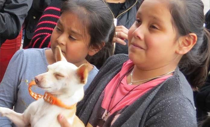 Realizarán campaña de esterilización de mascotas