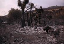 Consejo Forestal presenta plan de restauración ecológica tras incendios