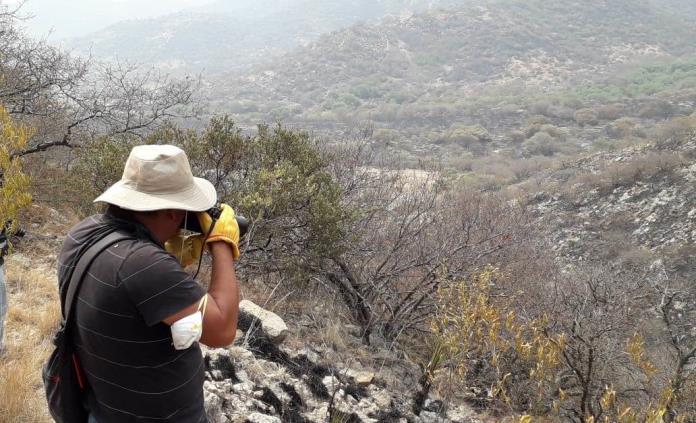 Ley impide cambio de uso de suelo en sierra de San Miguelito, reitera titular de Desarrollo Urbano