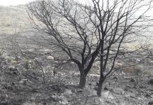 Brigadistas mantienen proceso de extinción del fuego en la sierra de San Miguelito