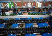 Europa abre sus puertas al aguacate mexicano