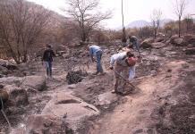 Suman 9 mil hectáreas siniestradas por incendios: Conafor