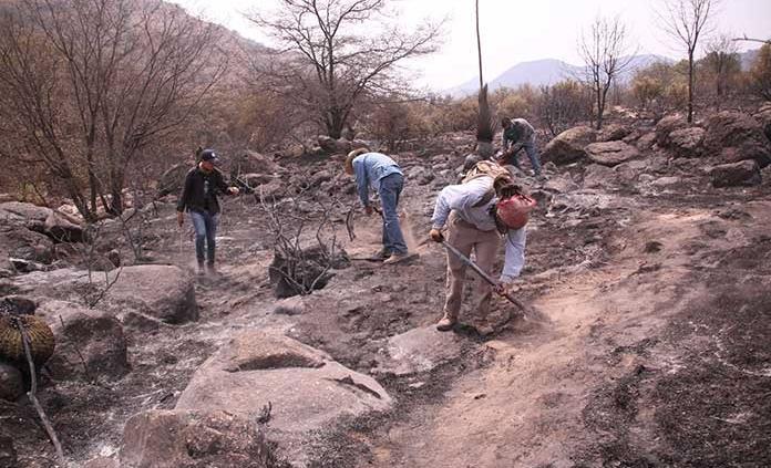 Realizan recuento de daños en sierra de San Miguelito