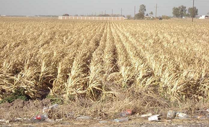 Sufre SLP su peor sequía en 20 años