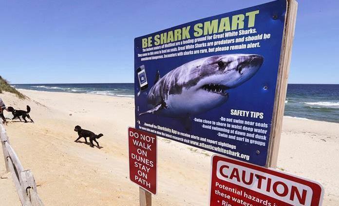 Tiburón muerde a hombre sin soltarlo durante 15 minutos en Florida