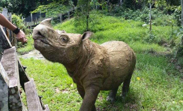 Resultado de imagen para Reserva de Vida Silvestre Tabin de Sabah